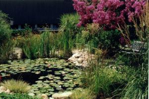 Landscape Design Virginia